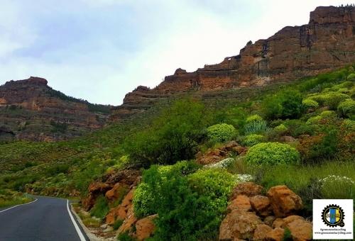 Gran Canaria Cycling green