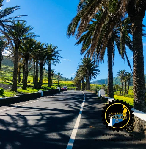 cycling lanzarote palms