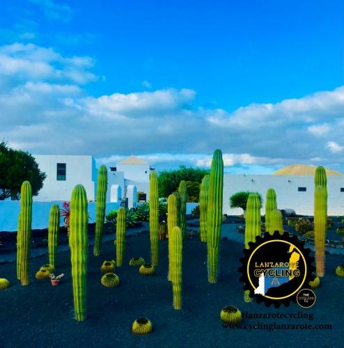 lanzarote cycling cactus